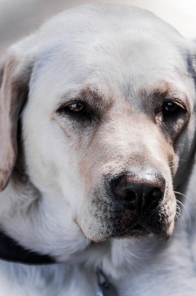 Tahoe Dog