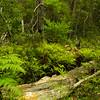 Rain forest - Illawarra
