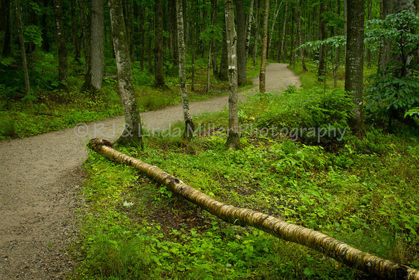 Trail to Miners Falls, Alger County, Upper Peninsula, Michigan