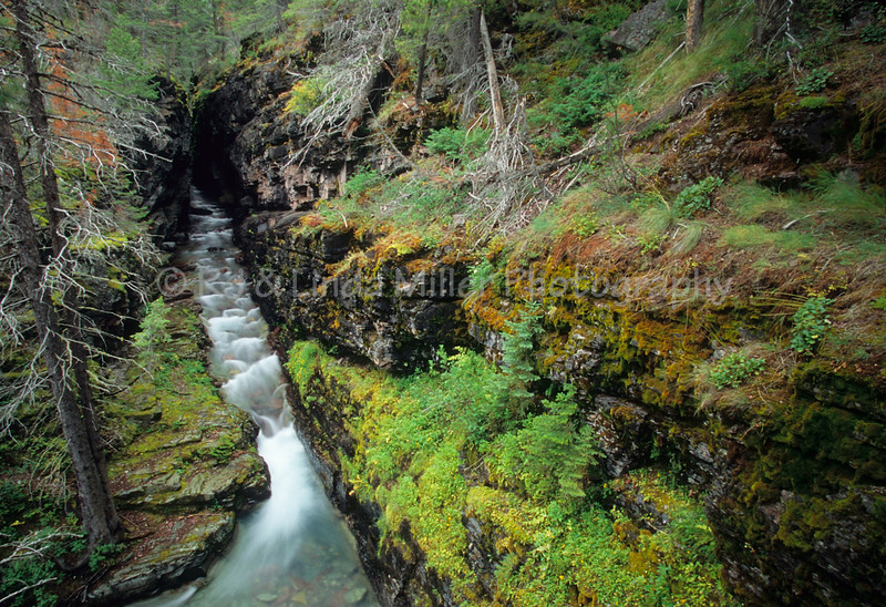 Avalanche Canyon, Avalanche Creek, Trail of Cedars, Glacier National Park, Montana, US