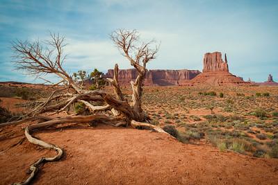 Desert Roots