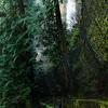 Hiking pathways at Multnomah Falls - Columbia River Gorge, Oregon