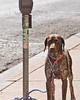 Meter Dog