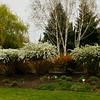 Beautiful Oregon Garden, Silverton