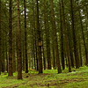 Snall forest at Oregon Garden, Silverton