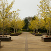 Early Spring at the Oregon Gardens, Silverton