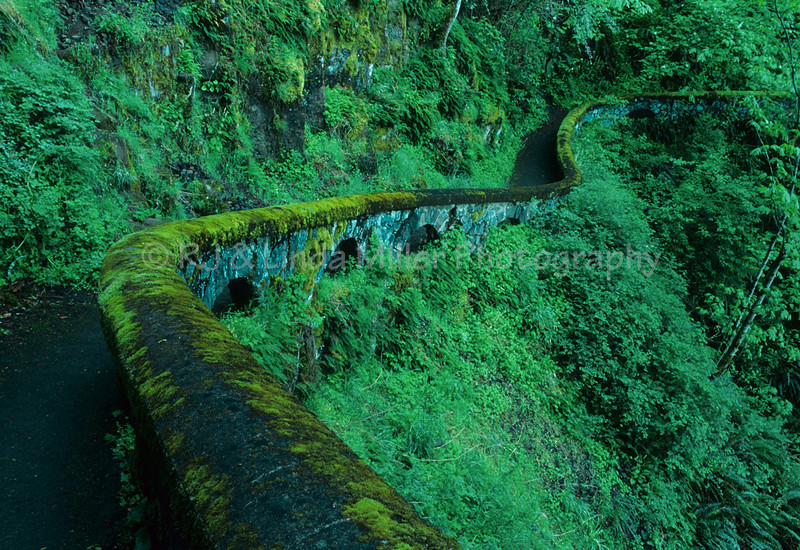 Trail to Shepperds Dell Falls, Columbia River Gorge, Oregon, USA
