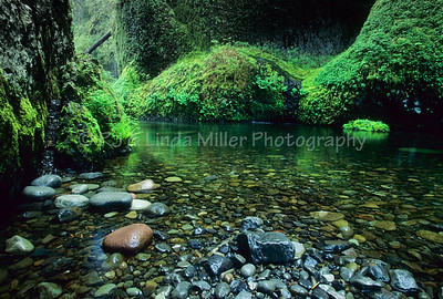 Punch Bowl Falls, Columbia River Gorge, Multnomah County, Oregon, USA