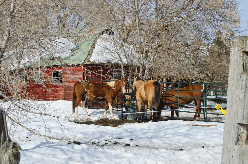 Horse Ranch, Midway, UT