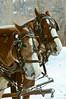 Sleigh Ride at Stillman Ranch, Rocky Mountain Recreation, Park City, UT