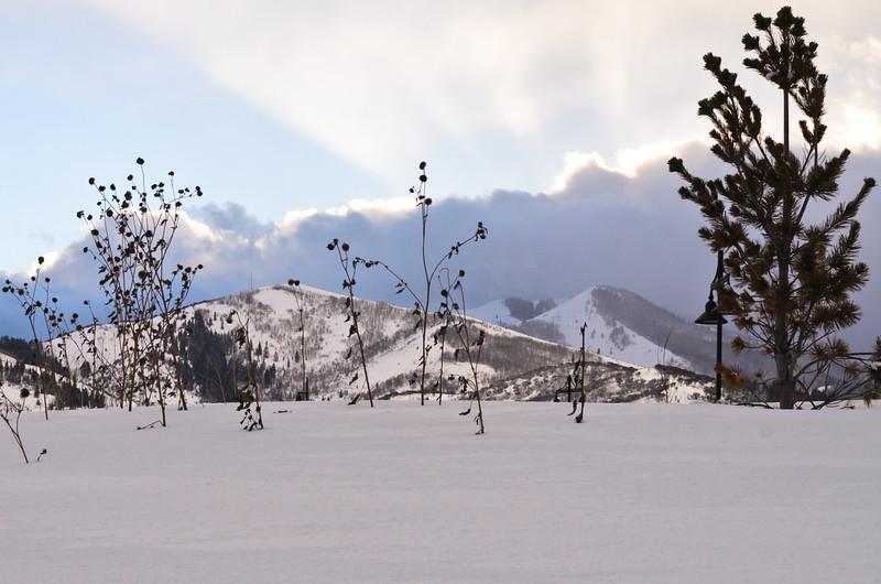 Snow Landscape, Park City, Utah