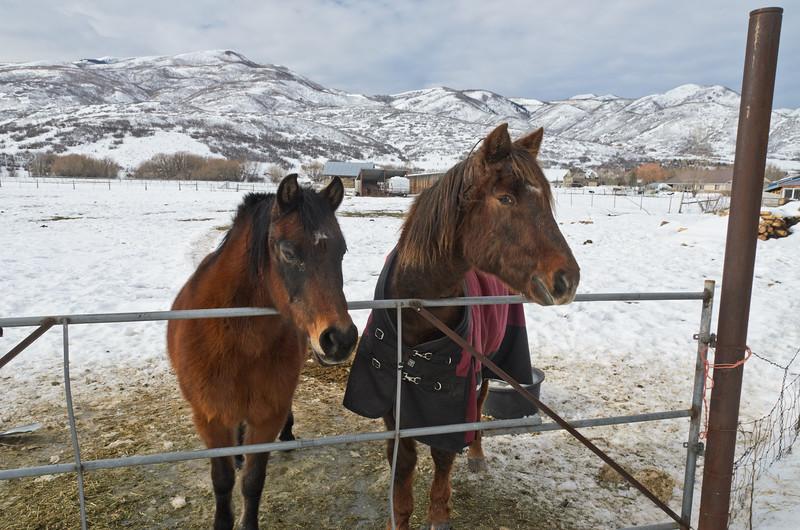 Horse Ranch, near Midway, UT