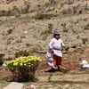 AM 318 - Bolivia, Isla del Sol