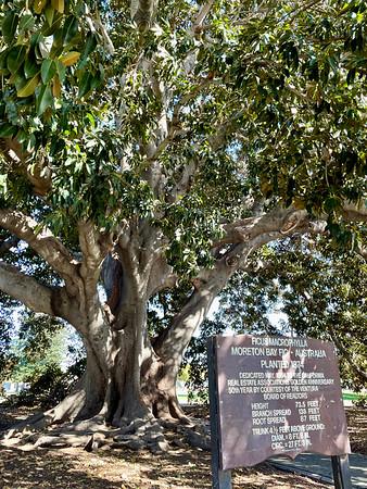 Ventura Plaza Park