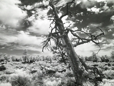 Craters of the Moon, ID.  IR Photography