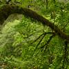 Hiking trail to Salmon Falls, Oregon