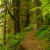 Trail to Salmon Falls, Oregon