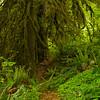 Trail to Salmon Falls, Oregon