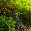 Silver Falls Hiking trails