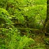 Vegetation at Silver Falls