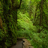 Hiking trail at Silver Falls