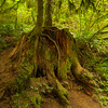 Amazing nature at the Silver Falls National Park
