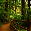 Take a walk in the woods - Silver Falls State Park, Oregon