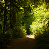 Hiking trails of Silver falls National park, Oregon