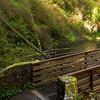 Hiking trails of Silver Falls, Oregon