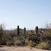 Tucson scenery, Arizona