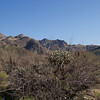 Tucson scenery, Arizona