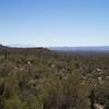 Saguaro National Park West, Tucson, Arizona