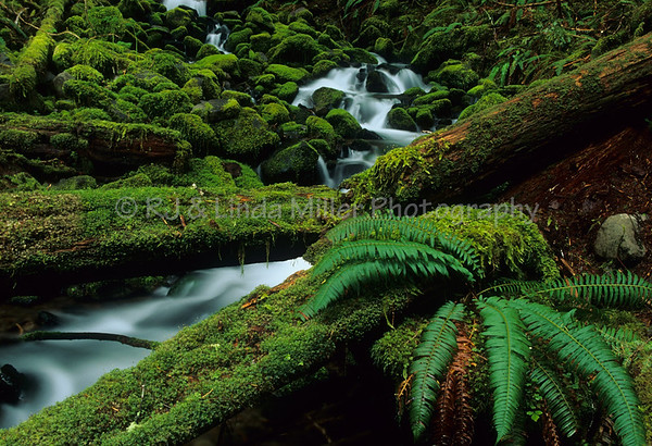 Small Waterfall, Sol Duc River Valley, Olympic National Park, Washington