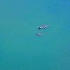 Haro Strait Killer Whales