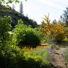 Gardens at Wiskeytown Lake lookout