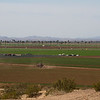 Yuma farms view from Arizona Western College