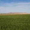 Yuma farmlands