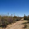 Scenery near Kitt Peak Observatory, Arizona