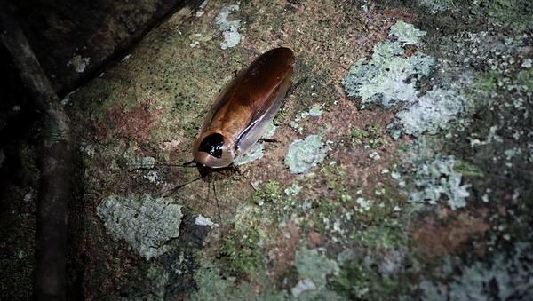 Huge - almost 15 cm long