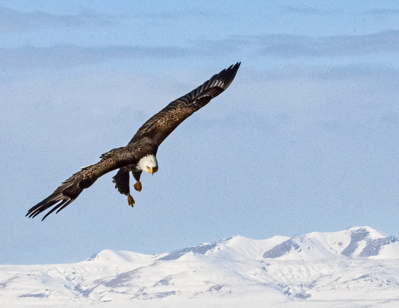 Coming in from altitude.  It is amazing how fast they can slip air.,