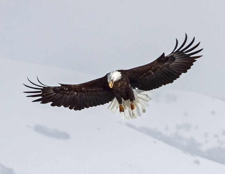 The essence of an Eagle, 