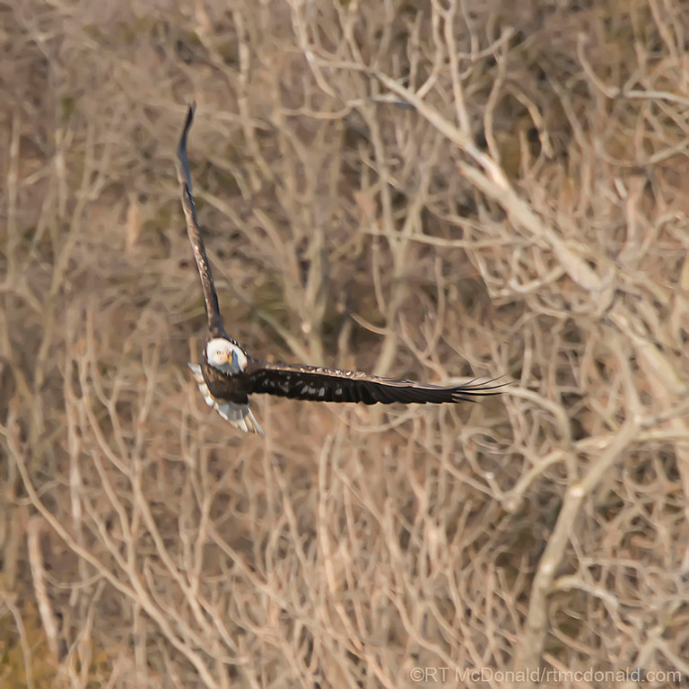 Soaring Eagle 1