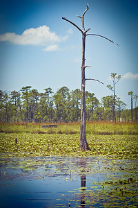 Big Branch Swamp