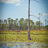 Big Branch Swamp