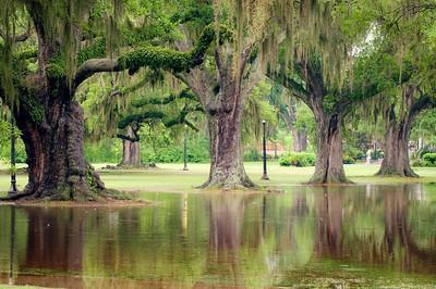 Flooded Audubon Park