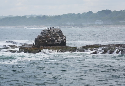 Whale Rock
