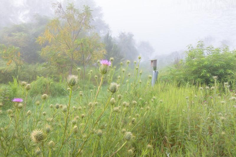 Meadow Musings