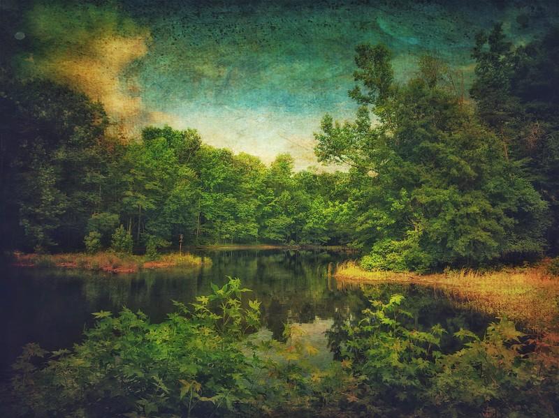 Impressions of Goose Pond