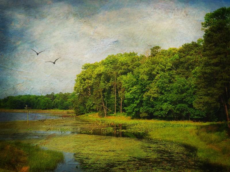 Impressions of Cash Lake