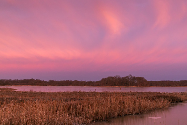 The Marsh is Pink